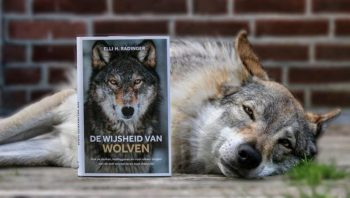yuriko-wijsheid-van-wolven-768x435